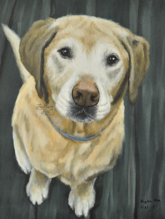 """Jack, an unforgettable Golden Retriever -16""""x20"""" Acrylic painting from Feathers and Fur Portraits (Bryan Man)"""