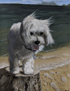 "Guava, the Miniature Maltese on a Hawaiian Adventure - 11""x14"" Acrylic portrait from Feathers and Fur Portraits (Bryan Man)"