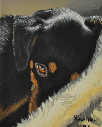 """Sleepy Lucy - 11""""x14"""" Acrylic painting from Feathers and Fur Portraits (Bryan Man)"""